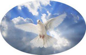 5654b0a4bd-dove